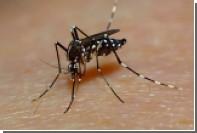 Ученые выпустят на волю миллионы комаров-мутантов