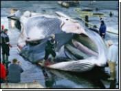 Как спасти кита при помощи аукциона eBay