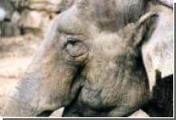 Американский зоопарк раздает слонов