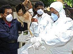 Второй случай H5N1 зафиксирован в Южной Корее