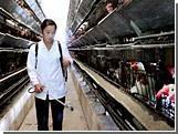 """В Южной Корее подозревают вспышку """"птичьего гриппа"""" после массовой гибели цыплят"""