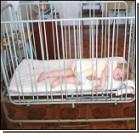 Украинка подбросила в квартиру двухлетнего мальчика