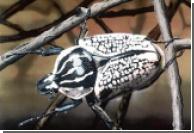 Украинский миротворец задержан с контрабандными насекомыми