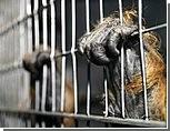 Европейские защитники животных советуют закрыть Киевский зоопарк