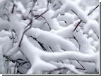 Синоптики рассказали, чего нам стоит ждать от зимы. И когда выпадет первый снег