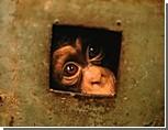 Из Киевского зоопарка исчезла почти половина животных