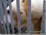 Московский зоопарк опроверг информацию об обстреле белого медведя Врангеля