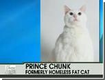 """В США умер """"без двух фунтов"""" самый толстый кот"""