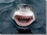 Австралиец спас девушку от белой акулы
