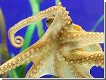 Преемник осьминога Пауля вступил в должность