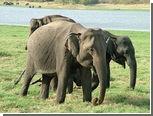 В Индии поймали банду контрабандистов слонов