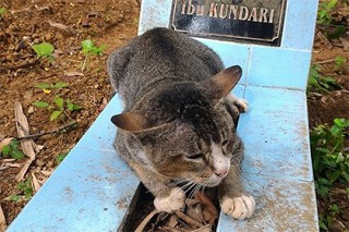 В Индонезии кошка прожила год на могиле своей хозяйки