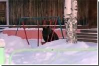В Томской области бурый мишка покачался на качелях