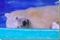 Самого грустного в мире белого медведя на время убрали из китайского ТЦ