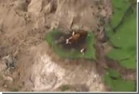 Землетрясение в Новой Зеландии превратило трех коров в островитян