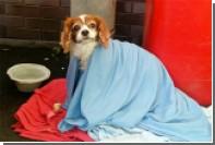 В Лондоне пес дождался госпитализированного хозяина у дверей больницы
