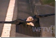 Национальная птица США застряла в канализации