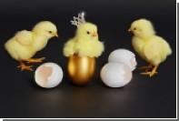 Люксовый интернет-магазин использовал в рекламе цыпленка в короне