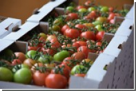 Минсельхоз предложил отказаться от турецких томатов еще на пару лет