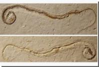 Палеонтологи разозлились на хозяина «четырехногой змеи»
