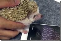 Ежа научили разблокировать iPhone