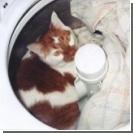 Живодерка провернула кота через стиральную машину