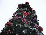 На главной площади Тирасполя установлена новогодняя елка