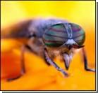 Работу генов будут изучать… мухи