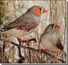 Птицы свои трели разучивают во сне