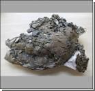 Обнаружены останки древнейшей черепахи