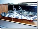 Строительство корвета для ВМС Украины может быть похоронено - в бюджете 2009 денег на него не предусмотрено