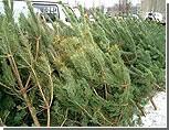 Приднестровцы не спешат раскупать новогодние елки