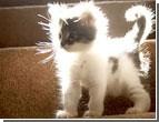 Котенок, которого подарили Ющенко оказался инфицированным. Найден целый «букет» болячек