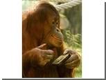 Орангутанг-фотограф завел профиль на Facebook