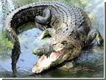Крокодил Игорь убил и съел двух самок