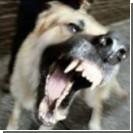 Бешеная собака покусала более 40 людей