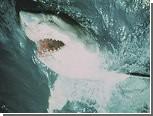 Пляжи Шарм-эль-Шейха закрыли из-за нападения акул