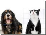Толстые домашние животные поучаствуют в чемпионате по похудению
