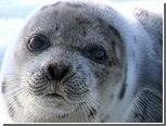 Тюлени помогли влюбленному американцу сделать предложение подруге