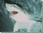 В Египте на туристов нападают акулы. Откусывают им руки и ноги
