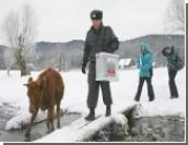 Говорящие с урнами: Медведев и Путин пообщались с ящиками для голосования / А глава ЦИКа Чуров пообещал урну съесть