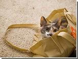 Пограничники нашли в поезде мешок контрабандных кошек