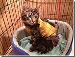 Официальный кот Риги перенес операцию