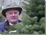 Похищенные новогодние елки нашли по следу из иголок