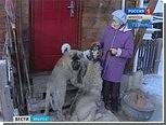 В Иркутске открылась служба поиска пропавших домашних животных
