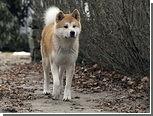 Якутскому псу Хатико построят теплую будку