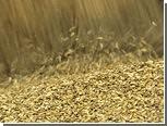 Украина отчиталась о рекордном урожае зерна