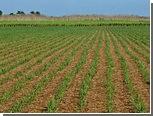 Куба построит электростанцию на сахарном тростнике