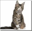 Женщине банк дал кредит на покупку кота