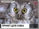 Жительница Челябинской области поселила в курятнике сову
